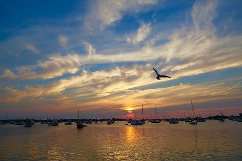 Birds And Boats At Dawn