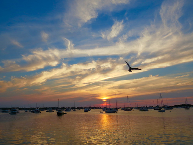 Bird and boats at dawn.jpeg