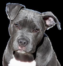 dog-2438803_640.png