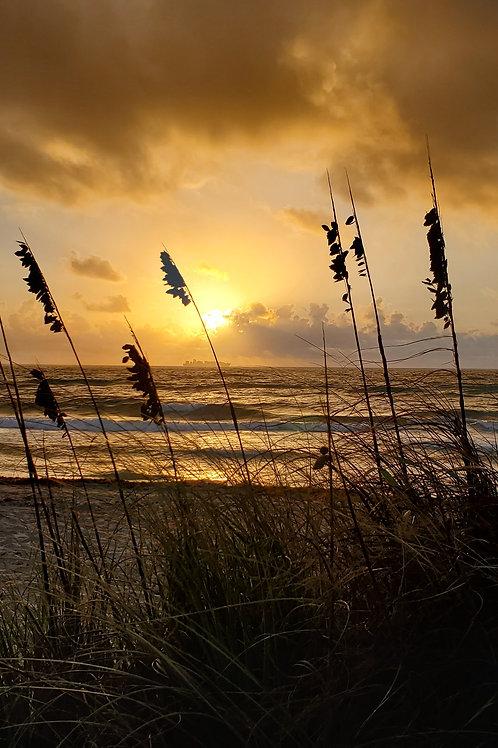 Sepia Sea Grass