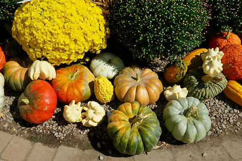 Gourds And Crysanthemums