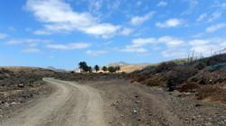 Oasis road