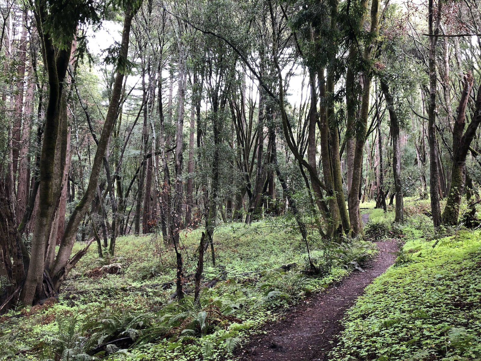 Photo of the Bay Area's Wilder Ranch forest mountain bike singletrack trails.