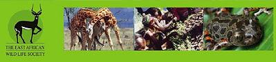 営農型太陽光発電,ソーラーシェアリング,農法,吉田愛一郎,大林登,儲かる農法,アグリ,FIT制度,売電収入,低圧全量買取,農業法人設立,農地転用,農地一時転用,収量80%以上,必要な知識を有する者の意見書,営農計画書,作付配置図,農業販売ルート計画,年間収穫量見込,農業年間収支見込,年間発電予想,売電収支計算書,農業事前相談,営農型申請,平均的単収,高く売れる野菜,耕作者,発電事業者,新規営農者,農業起業,営農相談,参農相談,就農相談,農業適合証明申請,農地に家,高収入農業,儲かる農業,週末農業,週末農家,農業安定収入,農業融資,農業補助金,農業助成金,農業移住,農地ナビ,農地,農地法,耕作放棄地,不耕作地,荒廃農地,遊休農地,農家高齢化,基幹作物,六次化,二毛作,ミント栽培,白しいたけ,菌床栽培,菌床販売,薬草栽培,水耕栽培,八ヶ岳清里,八ヶ岳農業,グリニッシュ,フェアトレード,アフリカ支援,ケニア大使館,楽な農業,新規就農,農家になるには,農業つらい,農業儲からない,離農,風の時代