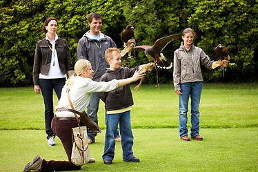 Learning Falconry and handling Birds of Prey