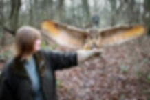 Learning Falconry owl