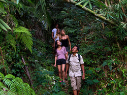 Tropical Trekking