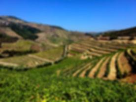 Portugal Vineyard.jpg
