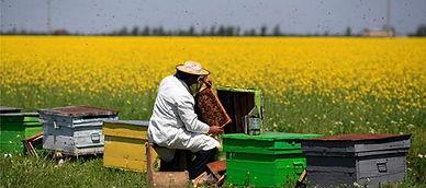 Checking Beehive