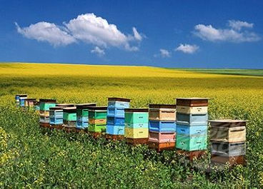 beehive3.jpg