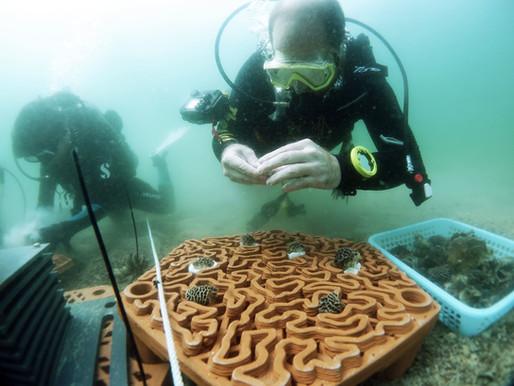 Repopulating Coral Communities