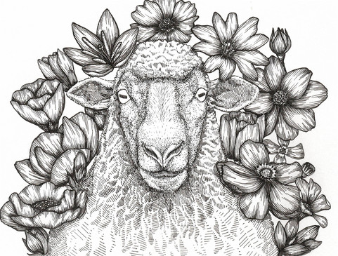 Sheep Flowers