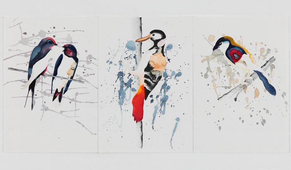 Birds Phobia (2014)