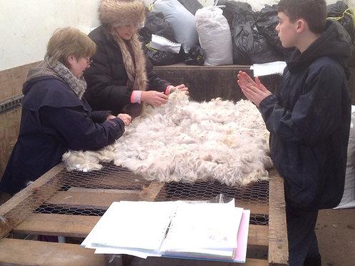 Alpaca Fleece Sorting Workshop
