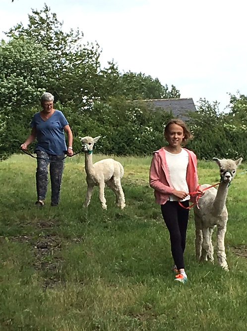 Alpaca Experience for Two Boxed Gift Voucher