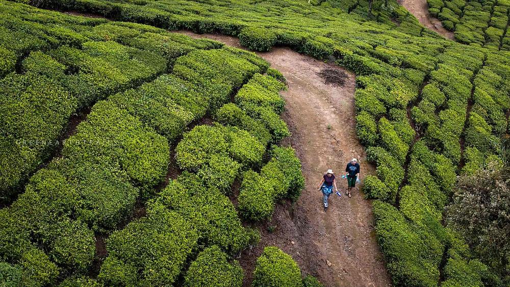 Off beat trek in Munnar,Green Earth Trails,Munnar, walk through tea munnar tea plantation, munnar tea plantation, trip to munnar off beat things to do in munnar, tour to munnar, places to visit in kerala, places to visit in munnar, kerala tour operator, kerala tour operators, south india tour operator