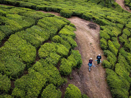 Off beat things to do in Munnar, escape the crowds