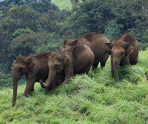 Thekkady Periyar National Park.jpg