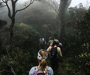 walk to munnar hills.jpg