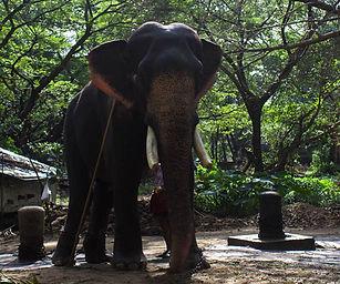 elephant sanctuary kerala.jpg