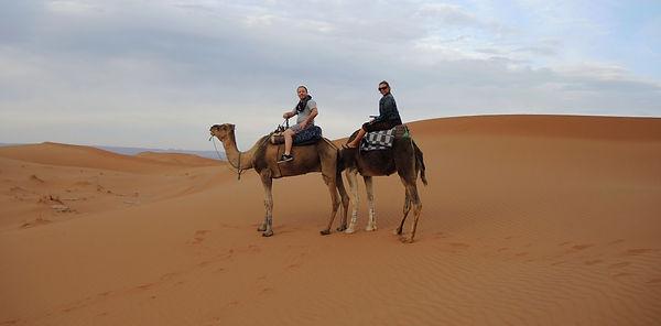 Camels Sahara desert Morocco