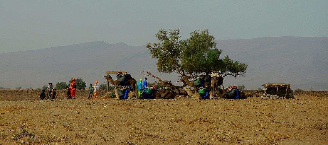 Sahara Desert convoy Morocco camels Bedouin