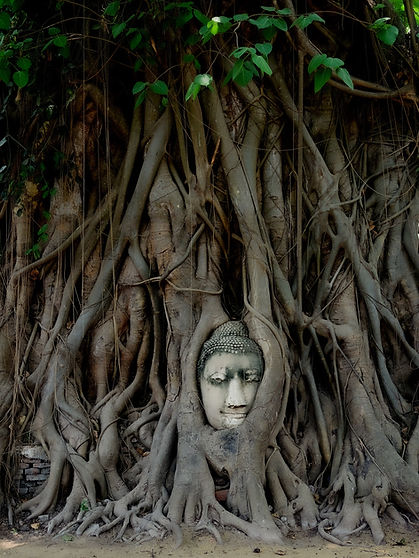 Ayutthaya Buddha face.jpg