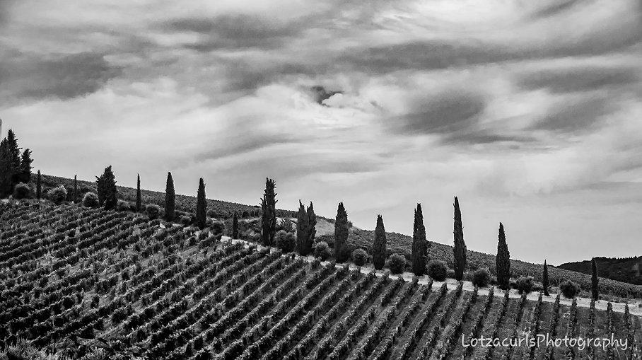 North Tuscany trees Italy