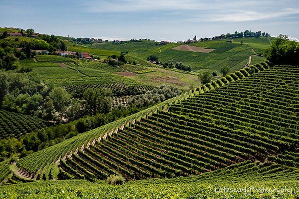 Neive vineyards.jpg