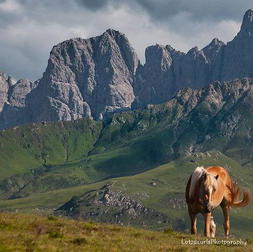 Alpe di Suisi horse Dolomites Italy