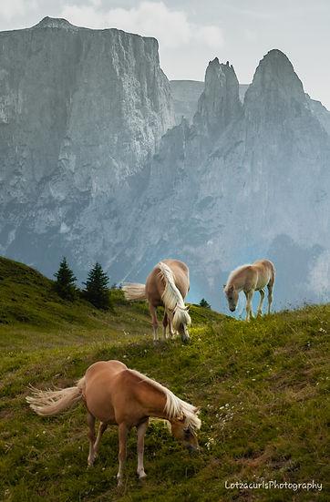 Alpe di Suisi horses Dolomites Italy
