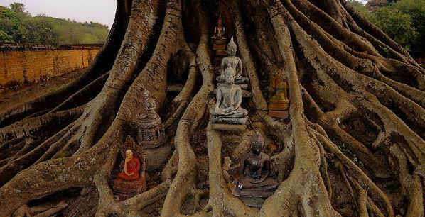 Sukhothai Buddhas.jpg