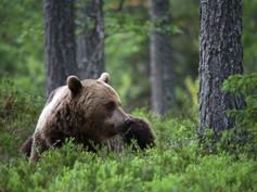 Arvokas metsämme -dokumentti keskustelun herättäjänä