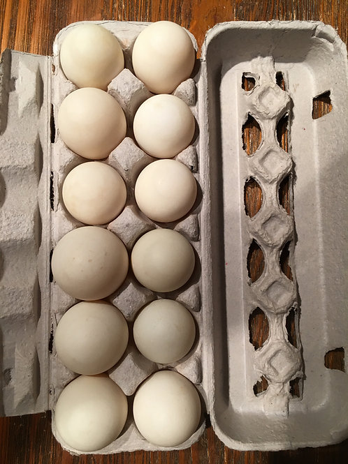 Duck Eggs, Liberty Tree Farmstead