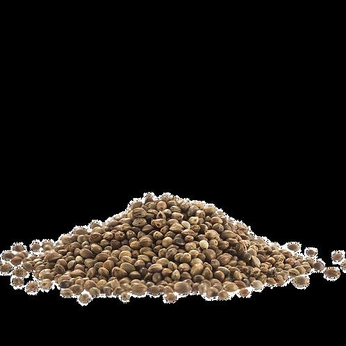 Toasted/Salted Bulk Seeds