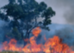 BUSHFIRE PHOTO.png