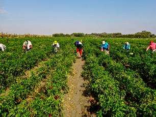 Los retos de la Agroindustria: un problema de tierras