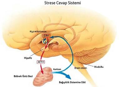 stres tedavi, psikolojik destek