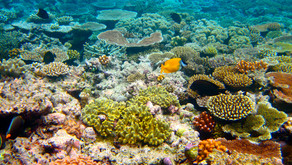 Great Barrier Reef: A Profile