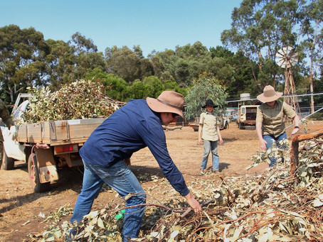 Minderoo Foundation Provides Funds and Resources to Bushfire Response, Recovery and Resilience
