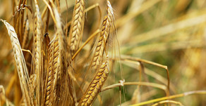 How Climate Change Affects Agricultural Production