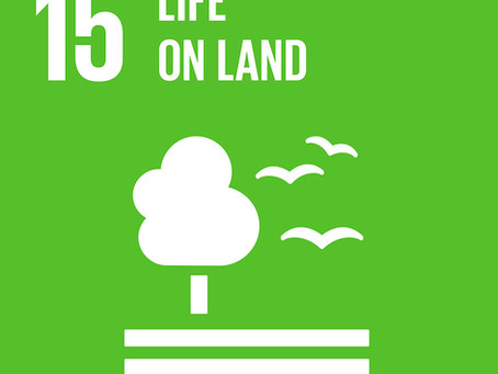 How Can Your Business Achieve Goal 15: Life On Land?