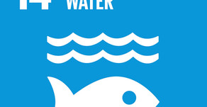 How Can Your Business Achieve Goal 14: Life Below Water?