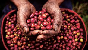 Akara Café's Fairtrade Coffee Break: What's It All About?