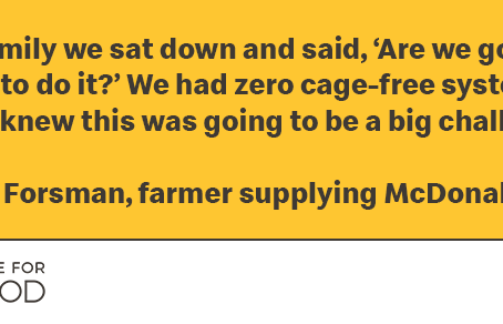 Sharing Progress on our Cage-Free Egg Commitment