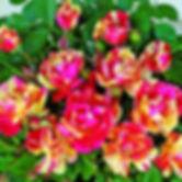 Саженцы роз Флорибунда из питомника Розебук в Подмосковье.