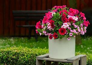 petunia_flowers_balkonblumen_flowerpot_t