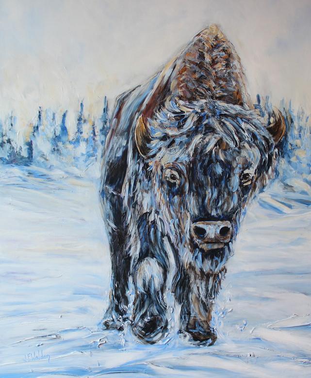 Frozen Bison
