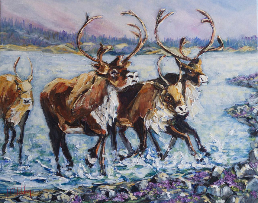 Summer Caribou