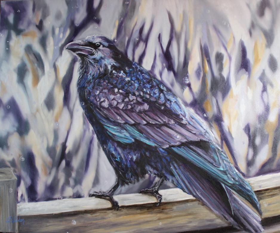 Rainy Day Raven